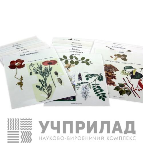 Гербарій «Дикорослі рослини»