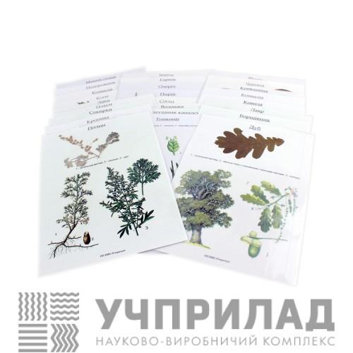 Гербарій «Основна група рослин»