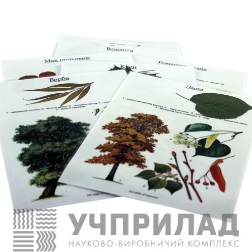 Гербарій «Рослини природних зон України»
