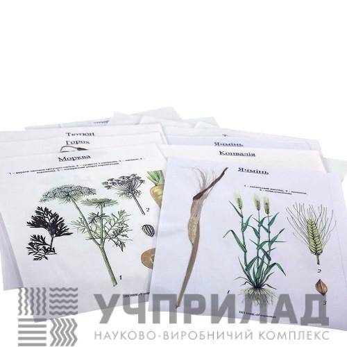 Гербарій «Культурні рослини»